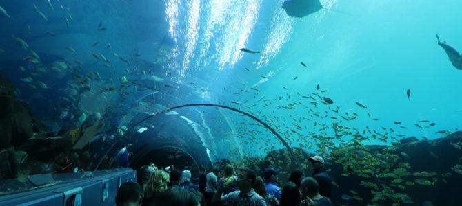 Georgia Aquarium – Not only about Fish