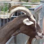 Leverkusen Deer Park Reuschenberg (Review)