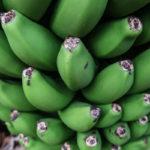 Finca Las Margaritas - Banana Experience on Tenerife