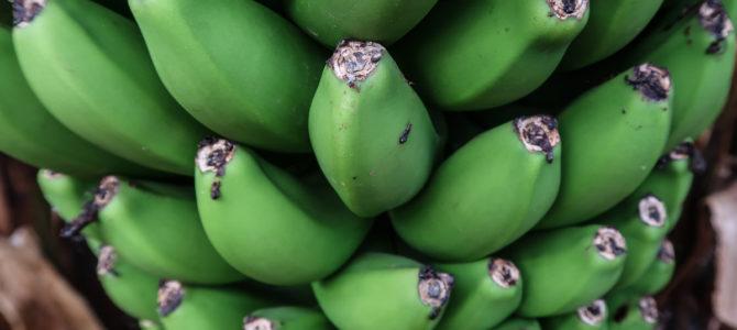 Finca Las Margaritas – Banana Experience on Tenerife