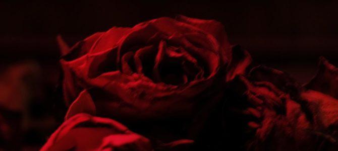 The Paper Kites – Roses