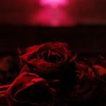 The Paper Kites - Roses