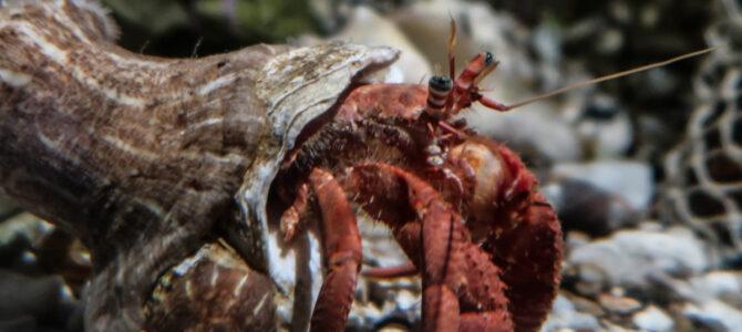 Sea Life Scheveningen (NED)