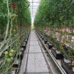 Emsflower - A Gardening Giant & Adventure Park