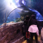 SeaLife London Aquarium