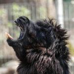 Fauna Animal Park Solingen