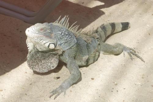 2018-07 Curacao